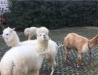 浙江农场萌宠服务 羊驼出租 袋鼠出租 骆驼斑马出租