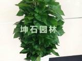 【17】上海绿植租摆的主要特点运营而生