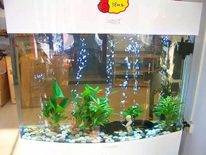 专业鱼缸清洗 鱼缸造景 鱼缸电路检测