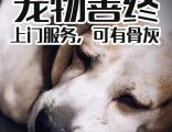狗死了為什么不能埋寵物墓地