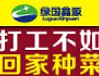 绿国鑫源芽苗菜加盟