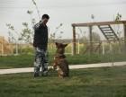 河北沧州兴丰农场代训犬基地,宠物寄养 宠物培训 宠物配种