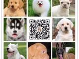 湘潭世界名犬直销纯种优质保健康