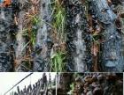 食用菌农产品