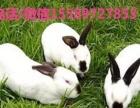 固原哪里有养杂交野兔的、杂交野兔价格