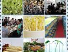 加盟 芽苗菜微工厂 ,成功创业致富