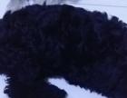 黑色的泰迪狗狗狗狗狗狗狗
