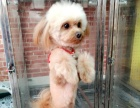 派多格宠物东湖景园店盛大开业徐东区域宠物洗澡美容寄养用品