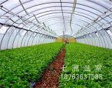结实耐用的多功能温室大棚推荐,草莓专用温室大棚