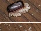 专业灭蟑螂 老鼠 蚂蚁 蚊蝇