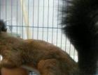 基地直销 兔子 仓鼠 鹦鹉 鸟 荷兰猪 松鼠 龙猫 八哥绿萝