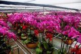 上海市鲜花保鲜库厂家建设