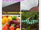 日光温室建设砖墙与土墙的哪种好