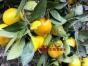 上海南汇农家乐 摘桔子钓大闸蟹 品农家菜