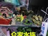 郑州本地商家 观赏鱼 鱼缸器材大全 清洗鱼缸