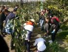 植树活动基地 公益植树去哪 上海植树场地