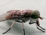 禽类专用 粘虫板 粘虫带