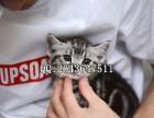 重庆什么地方有猫舍卖宠物猫 重庆哪里有卖美短