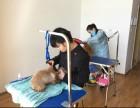 太原摩登宠物美容培训学校面向全国招生了