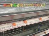 养鸡专用设备 蛋鸡养鸡设备 养鸡设备鸡笼