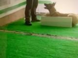 银川里有训犬基地