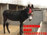 致富养殖场出售肉驴种驴小驴苗山东德邦牧业养殖基地
