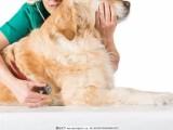 深圳宝安公明收费便宜的猫狗绝育宠物医院
