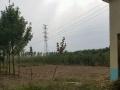 鄢陵南高速口500亩绿化基地出售