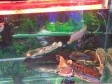 转让家养观赏鱼一缸 3500元