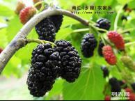 上海农家乐自驾游 吃土菜游海边 采葡萄桑葚西瓜掰玉米