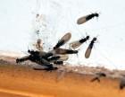 江油灭白蚁公司 江油灭飞蚂蚁公司 江油白蚁防治公司