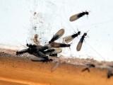 成都灭白蚁公司 成都白蚁防治公司 成都白蚁防治中心
