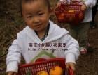 上海周邊農家樂推薦 采桔子釣大魚 吃灶頭飯菜 燒烤