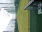 高尔夫连锁教学(金桥高尔夫)