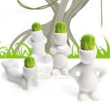 批发2014超可爱小花迷青草种植迷你植物盆栽 草娃娃