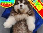 送货上门—专业繁殖阿拉斯加犬——签售后协议可见父母