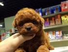 兰州哪有贵宾犬卖 兰州贵宾犬价格 兰州贵宾犬多少钱