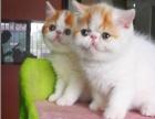 小灵通常年回收宠物猫