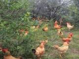 苏州西山农家乐枇杷杨梅采摘游活动 农家乐包吃包住90一天