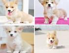 广州地区最大养殖场 出售世界名犬 可签协议 可送货上门