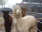 肉牛、肉驴、种马、种羊出售加盟 种植养殖