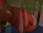 打包出4条鹦鹉鱼