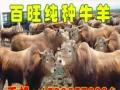 百旺牧业 百旺牧业加盟招商