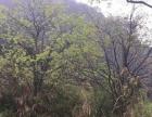 永泰 塘前 土地 15000平米