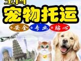 全国北京上海广州深圳专车宠物托运服务狗猫运输邮寄快递寄狗猫咪
