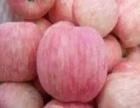 万亩水晶红富士苹果上市供应