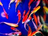 公园钓钓鱼供货红洋鱼红草金鱼 饲料鱼小洋鱼好养的鱼池塘小区