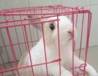 出售侏儒兔转让!!!