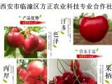 方正农业科技专业合作社来年预售樱桃