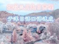 烟花三月赴日赏樱于洋日语口语速成班
